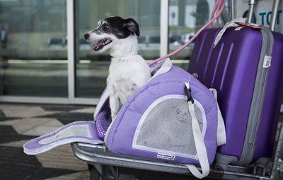 446411 970x600 11 400x255 - 5 dicas para viajar com seu pet sem estresse