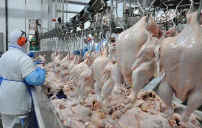 frigoríficos brasileiros exportar frango 400x255 - União Europeia embarga 20 frigoríficos de frango do Brasil