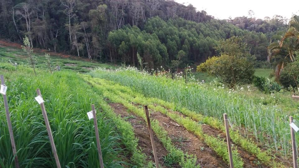 Plantas de cobertura: tecnologia e inovação a serviço da vida e da agricultura sustentável