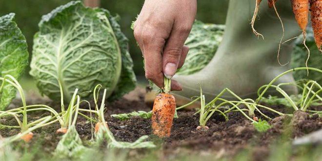 Iconha: Prefeitura convoca agricultores para seleção do programa CDA