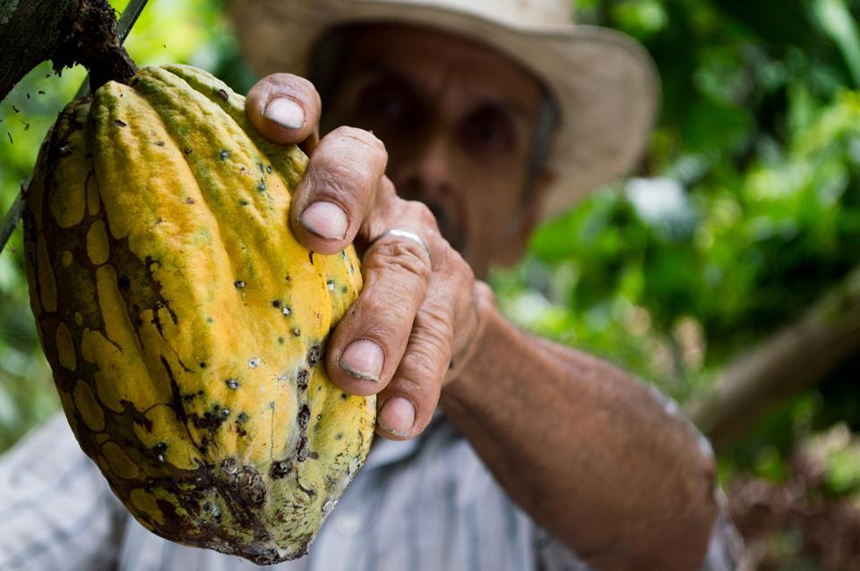Refin-Agropecuário 2019 facilita a regularização de dívidas de produtores rurais