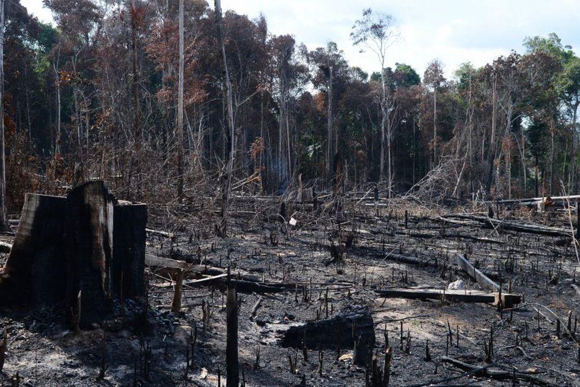 Desmatamento é principal preocupação do brasileiro, revela pesquisa