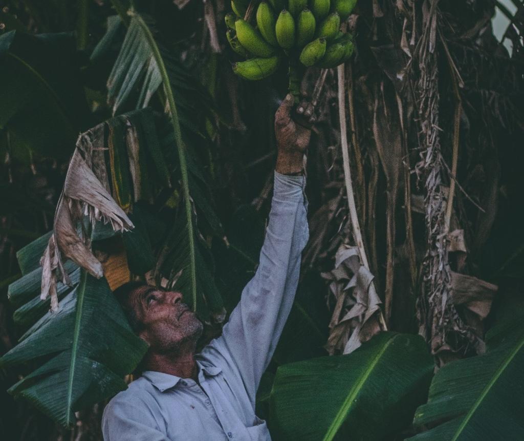 Cooperativa de agricultores de Iconha e região apresentam um novo caminho para a agricultura familiar