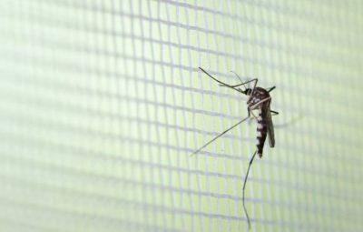 dengue 400x255 - ES tem cinco mortes por dengue nos primeiros três meses de 2020