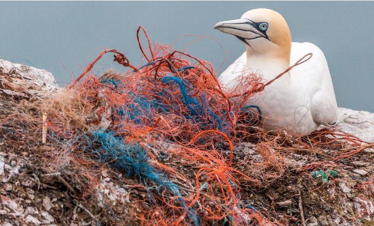 Poluição de plásticos em oceanos pode triplicar até 2040, alerta estudo