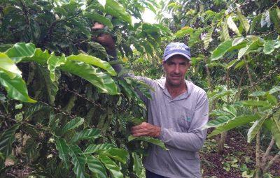 producao de cafe conilon pelo cafeicultor Gerson Camiletti em Sooretama 400x255 - Produção de café sustentável e tecnológica recebe suporte do Incaper em Sooretama